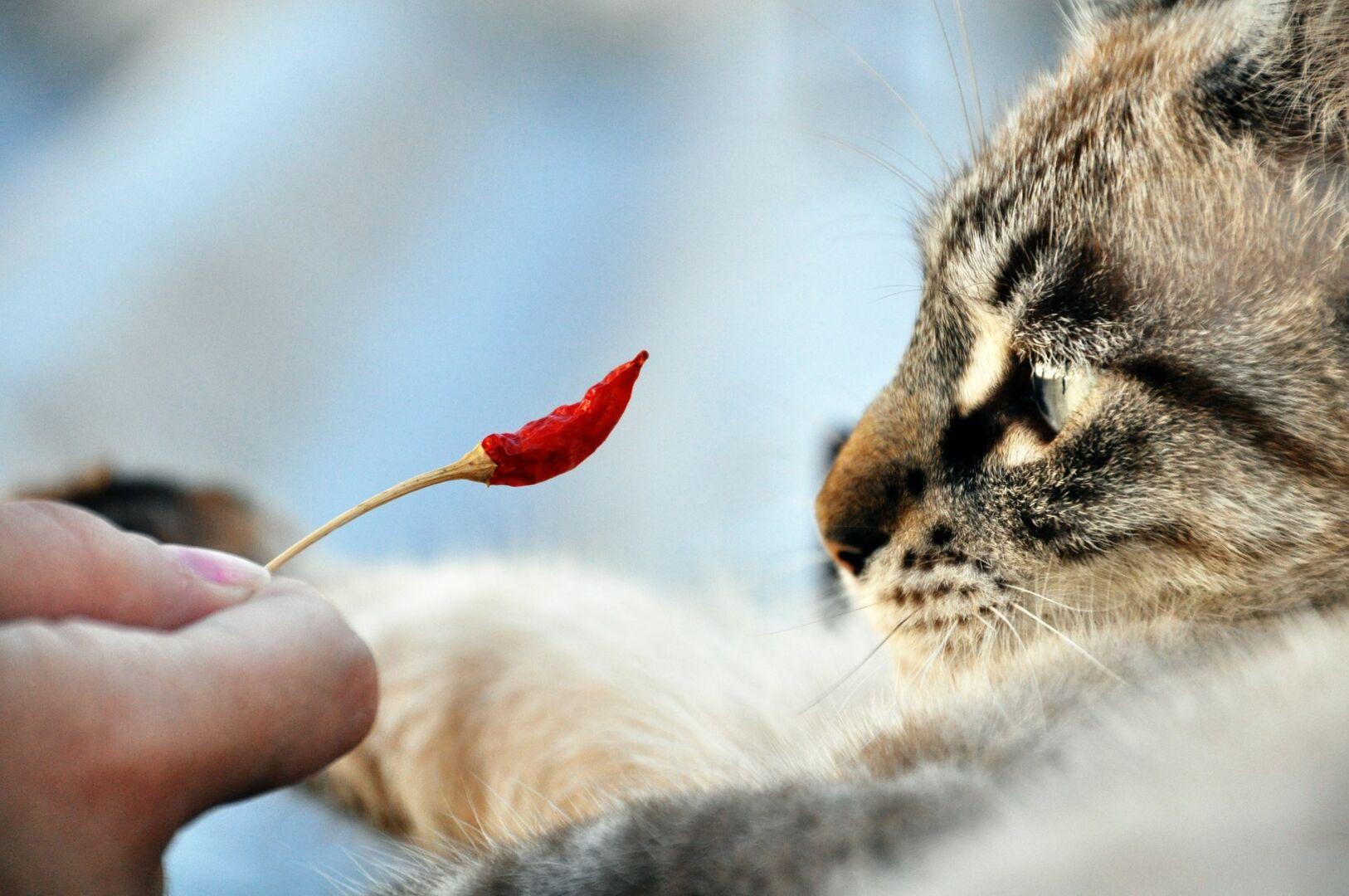 una de gato sirve para adelgazar