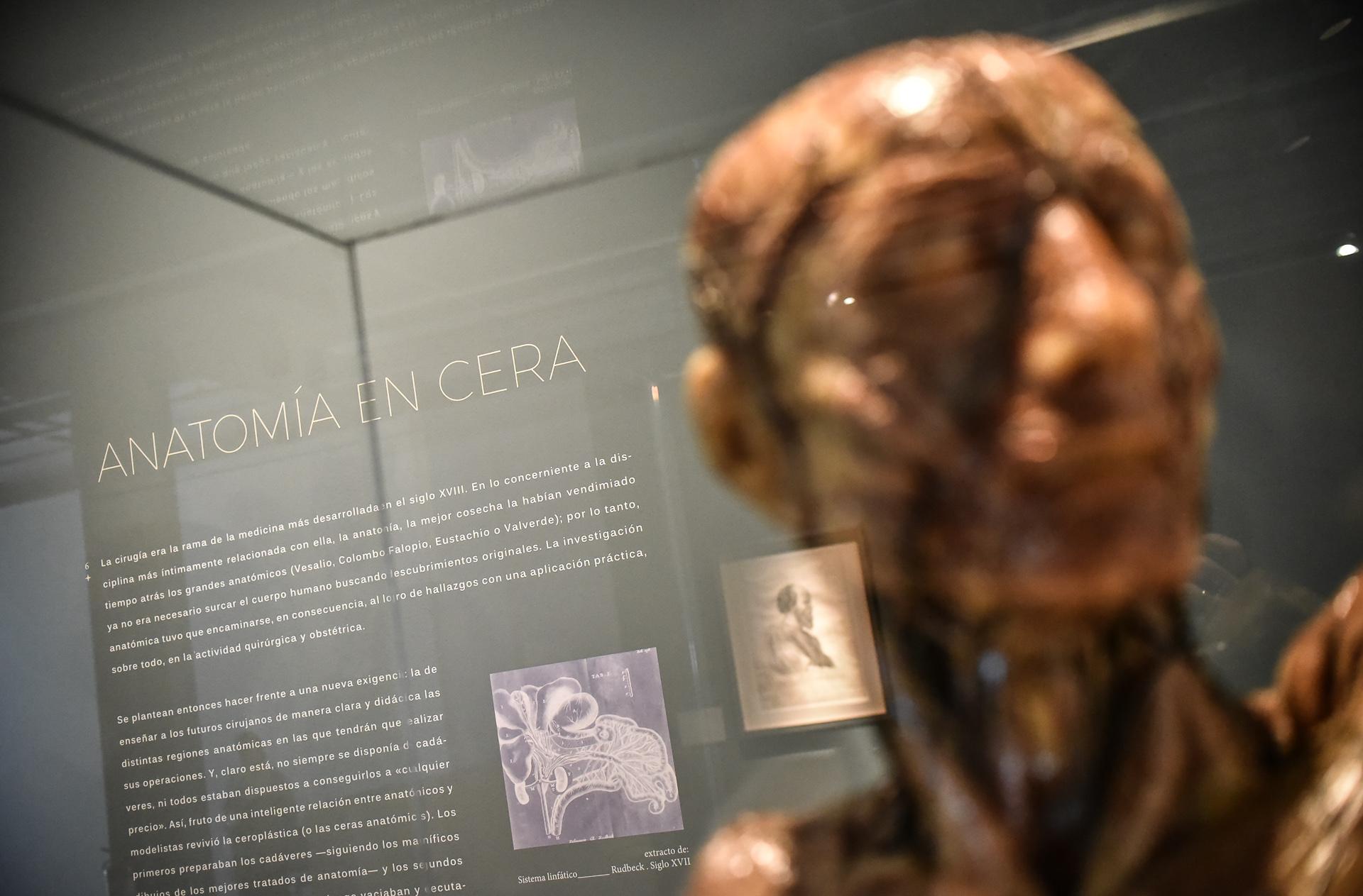 Obstetricia - Arte y Carne: La exposición que detalla la anatomía ...