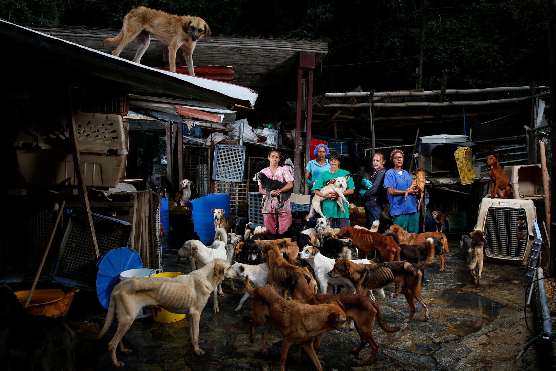 centro-acogida-perros-venezuela.jpg