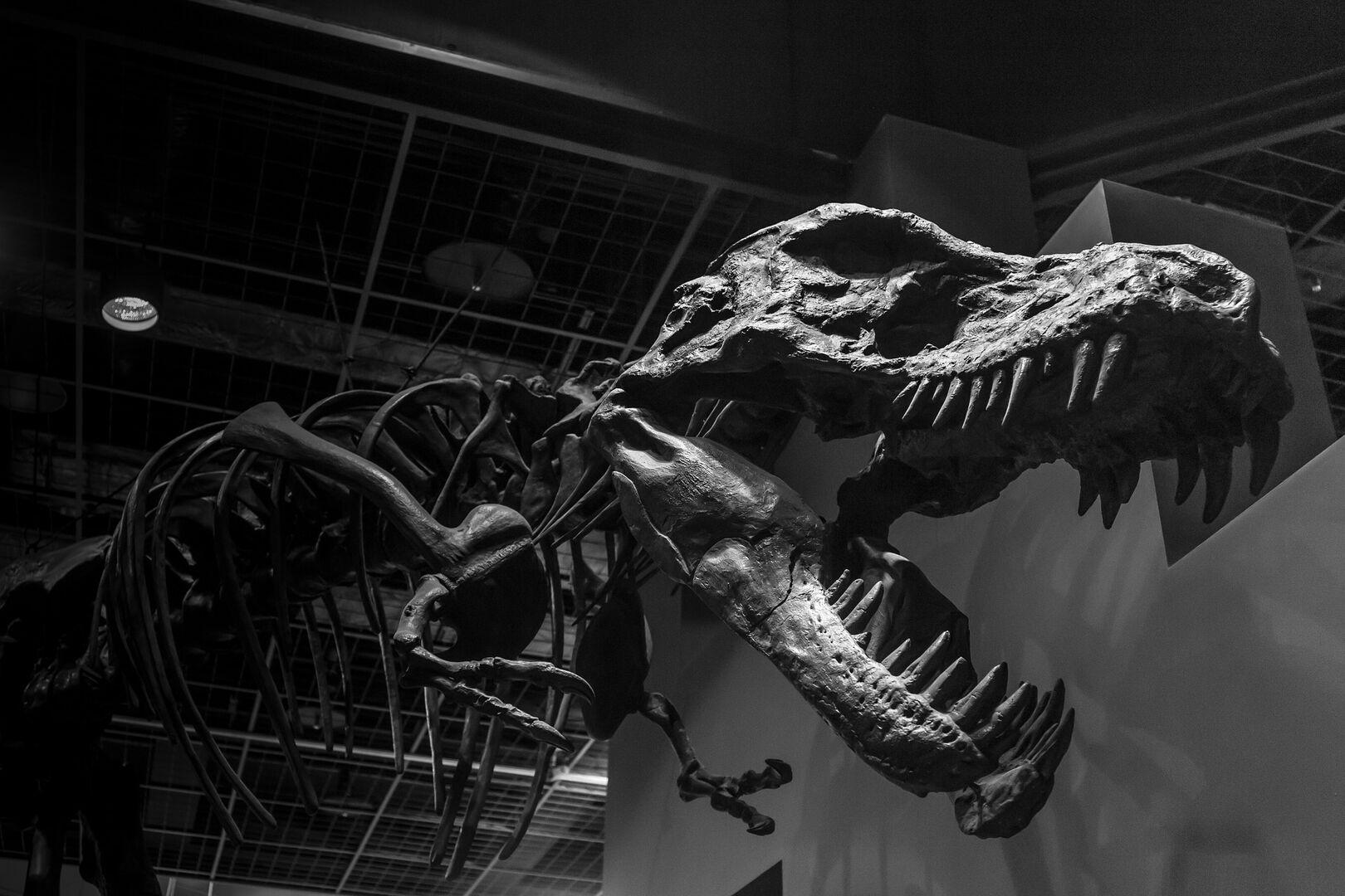 """""""Los frió y luego los congeló"""": así murieron los dinosaurios tras la caída del meteorito"""