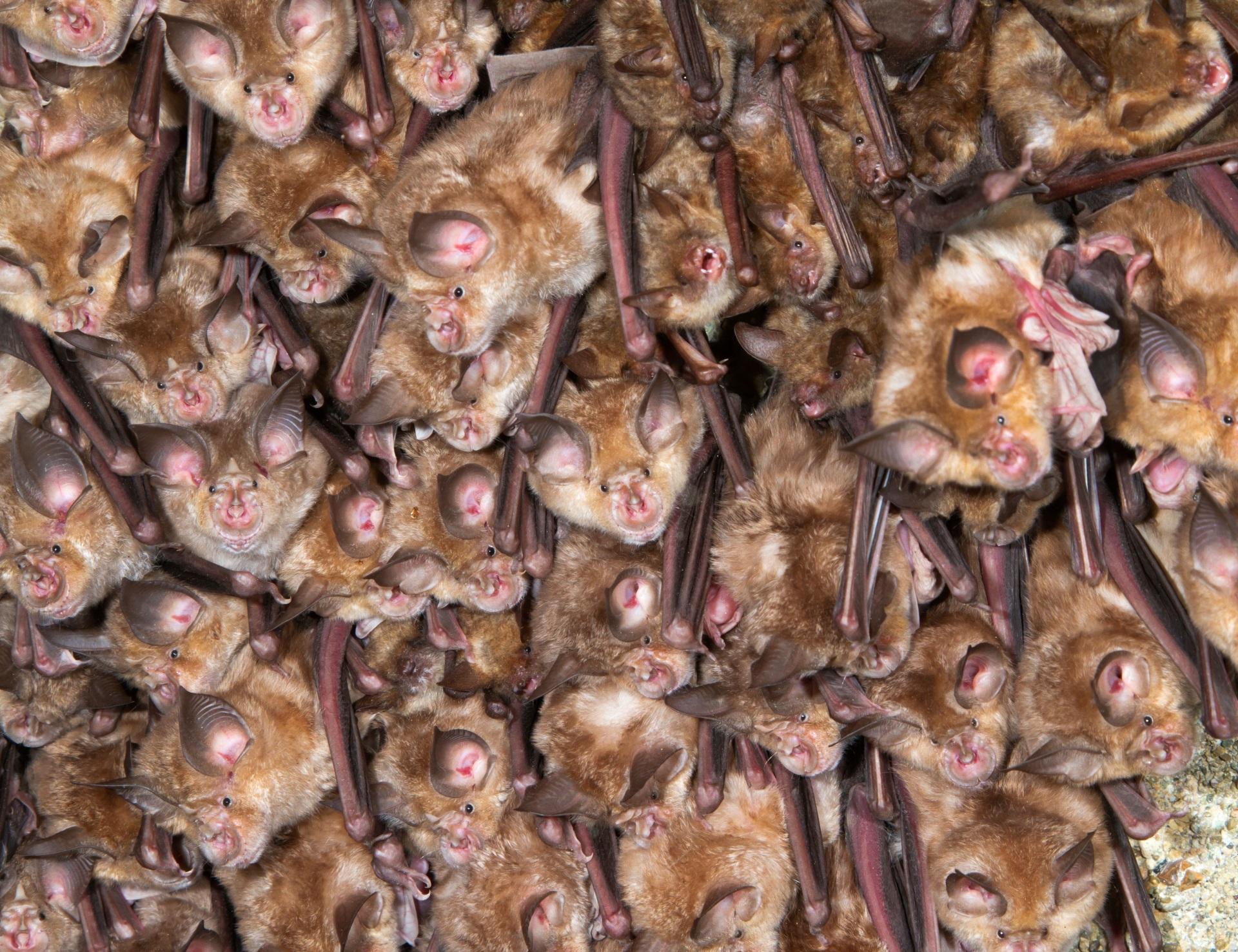 Un estudio científico certifica que no se vendieron murciélagos en Wuhan antes de la pandemia