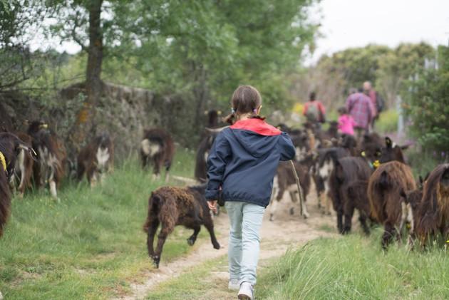 pastora-ruralit.jpg
