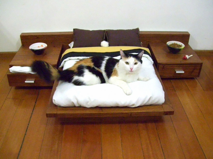 cosas-para-gatos-12.jpg