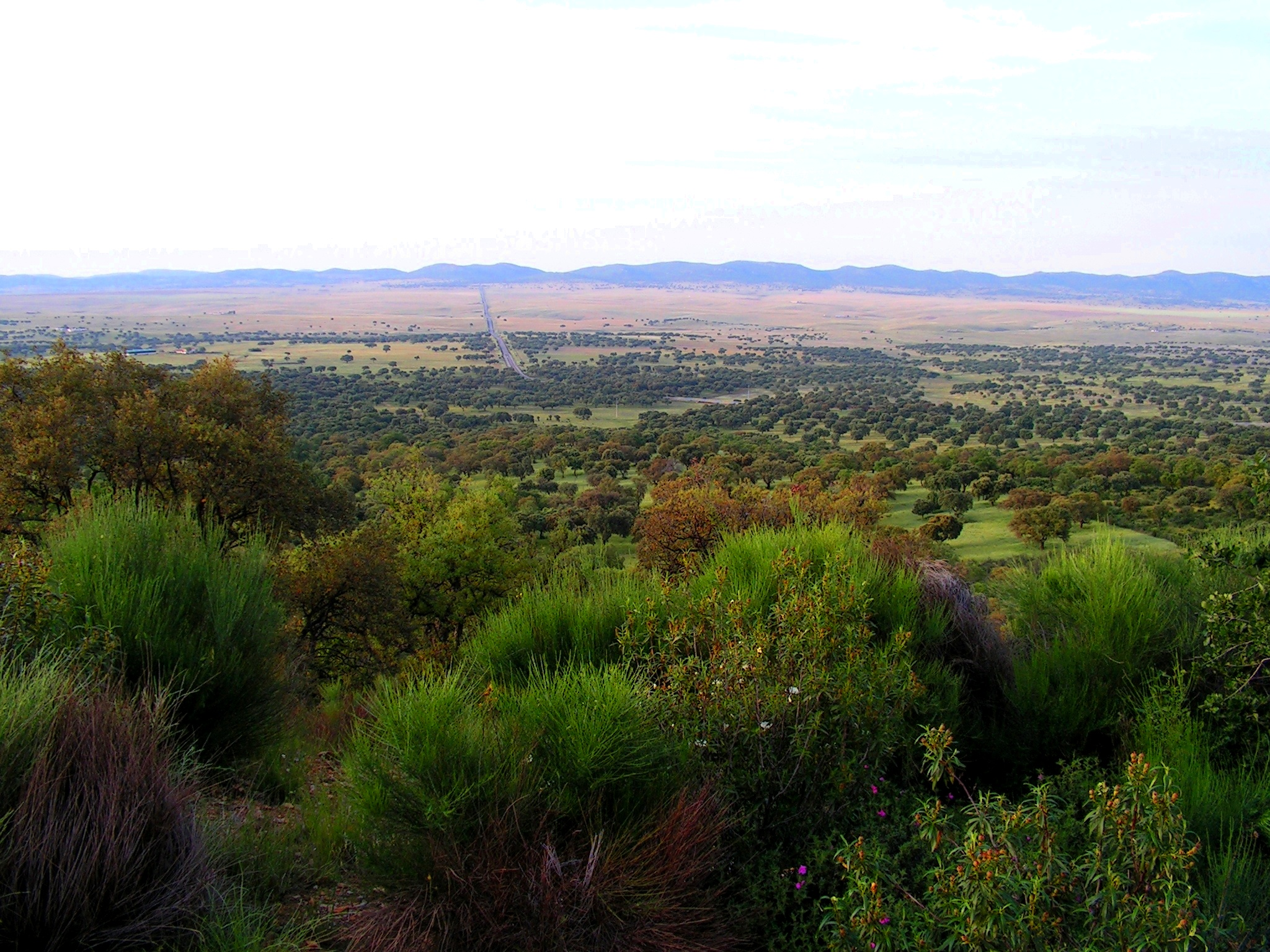 Vista_del_Valle_de_Alcudia.jpg