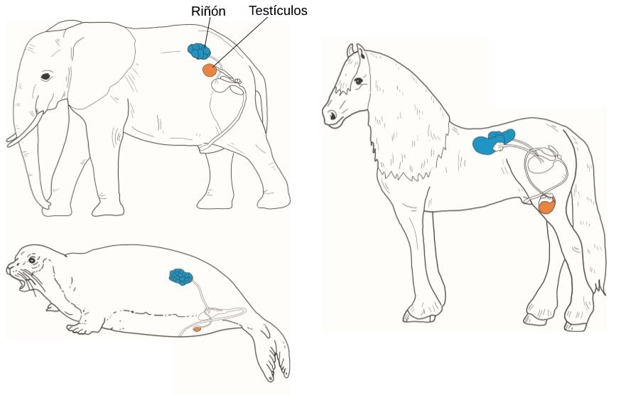 testiculos-animales.jpg