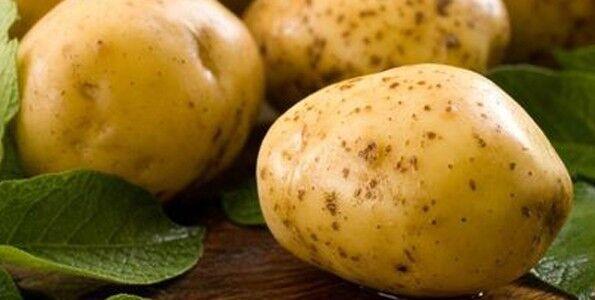 Tiempo de recogida de la patata