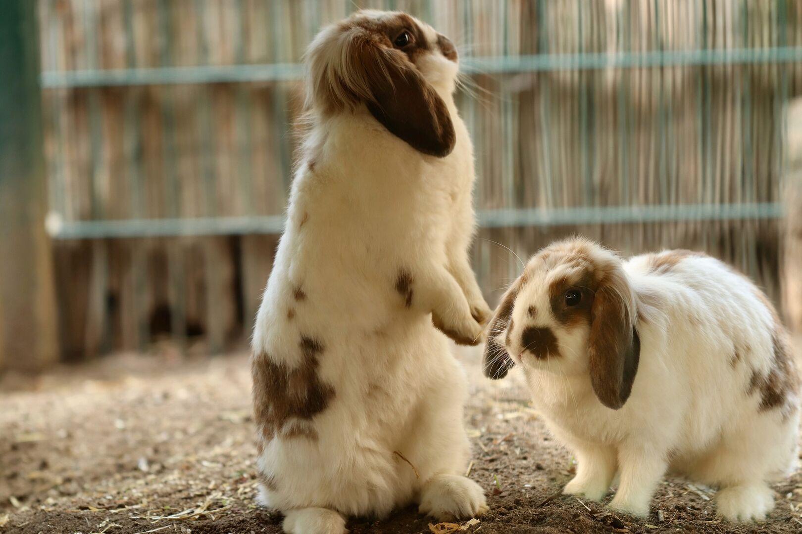 Mueren 100 crías de conejos de una granja después de que animalistas 'liberaran' a sus madres