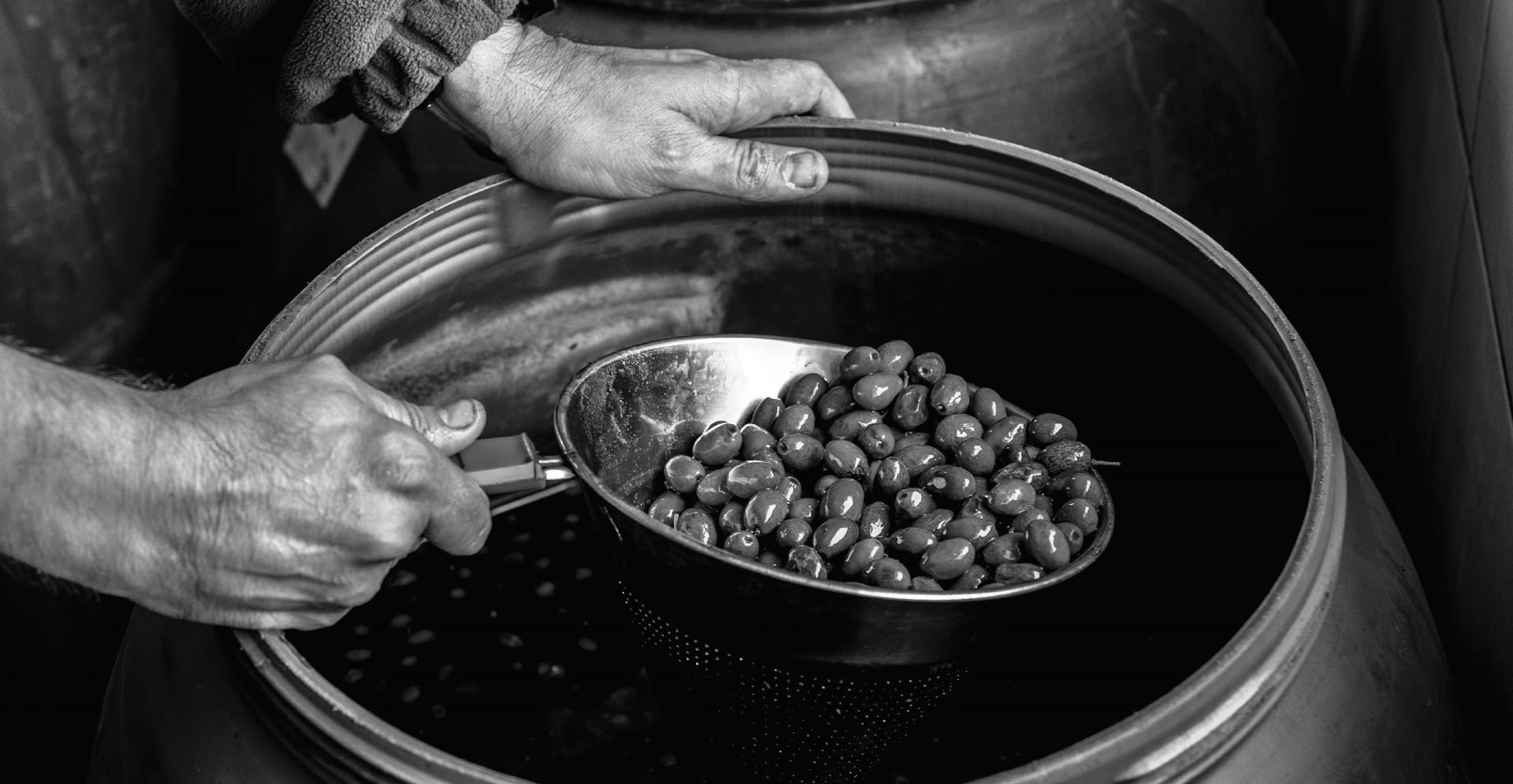 belchite-aceites-2.jpg