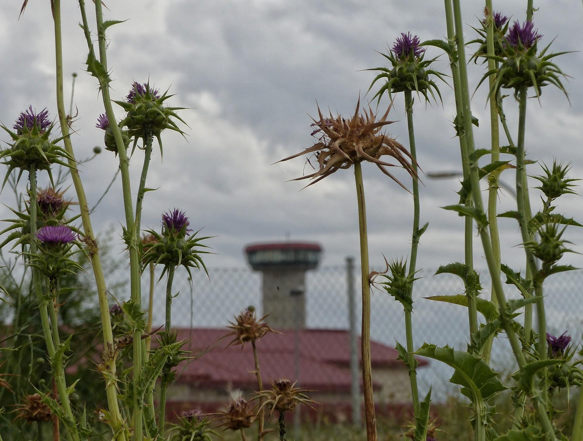 reportaje-prisiones-flores-030620.jpg
