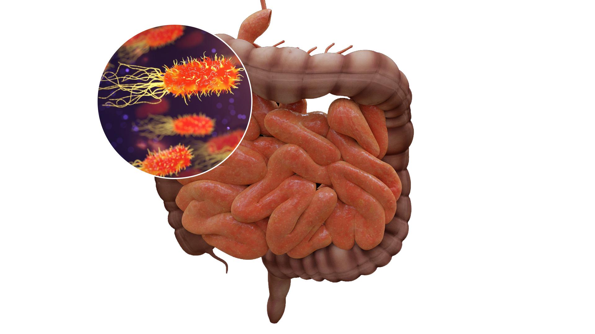 flora-intestinal-120421.jpg