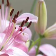 Decora tu casa con flores | Flickr/Cris Valencia