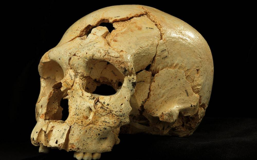 Los neandertales, más cerca gracias a 17 cráneos encontrados en ...