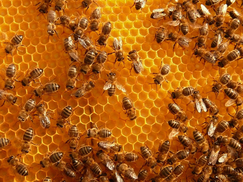 beneficios de la miel de abeja natural