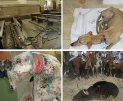 Alaksa denuncia a los terroristas y a los maltratadores de animales | Archivo