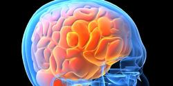 Imagen del cerebro | Universidad de Columbia