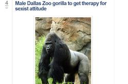 El gorila que será enviado a terapia.   NBCNews