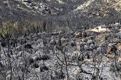 Las consecuencias producidas por el incendio | Efe