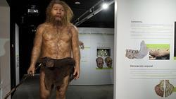 Imagen de un neandertal en una la exposición   MEH