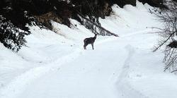 Nieve en el bosque de Irati | Efe