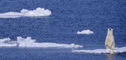 Un oso polar en el Ártico, otro de los mitos del calentamiento global. | Corbis