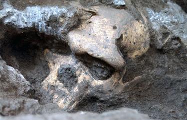 Cráneo número 5, hallado en Dmanisi, Georgia. | Museo Nacional de Georgia