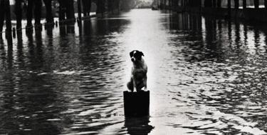 Perro abandonado en unas inundaciones en Londres | Corbis / J. Waldorf