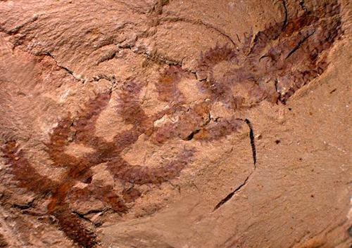 El fósil del extraño cactus   EFE
