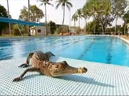 Aparece un cocodrilo en una piscina