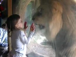 Cara a cara entre una niña y un león