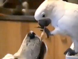 Cómo un pájaro alimenta a un perro