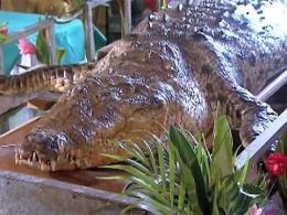Muere 'Poncho', el cocodrilo más famoso