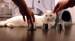 ¿El gato más listo del mundo?
