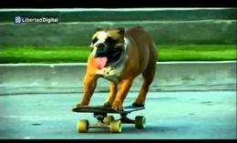 'Biuf', el bulldog skater