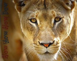 El reino animal en estado puro