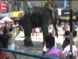 Elefante descontrolado en la India