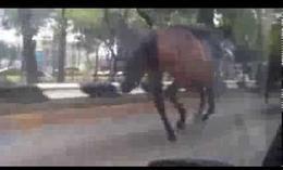 Estampida de caballos en México
