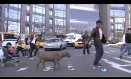 La cabra que prefiere Nueva York al campo
