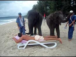 Elefante masajista