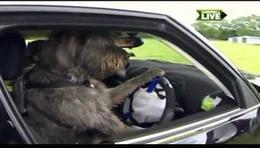 Perros conductores