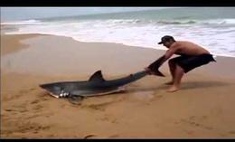 Tiburón de vuelta al océano