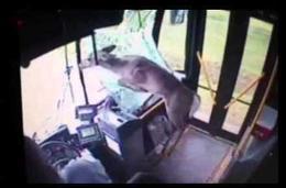 Un ciervo atraviesa un parabrisas
