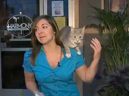 El gato reportero