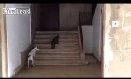 Un gato que lleva a un perro